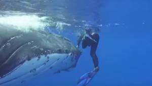 Niezwykłe nagranie pokazuje jak kobieta została osłonięta przed atakiem rekina.