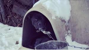 Wolontariusze mieli łzy w oczach, gdy zobaczyli tego psa... A jego właściciele t