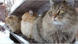 Te z natury żywiołowe koty grzecznie siedzą tylko wtedy, gdy sypie śnieg. Sami z