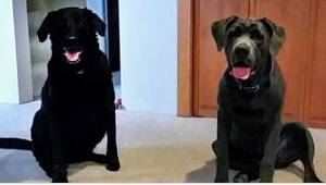 Kiedy ich dwa psy odeszły, chcieli zwrócić zamówioną przez Internet karmę. Reakc