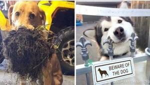 Każdy pies kocha być chwalony, ale te przeszły same siebie w próbach zasłużenia