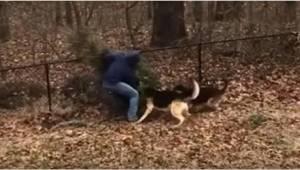 To, jak te dwa psy nie chcą, żeby ich pan wyrzucił choinkę, ubawi Was do łez!