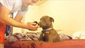 To, jak pitbull zareagował na widok maleńkiego kotka, rozczuli Was!