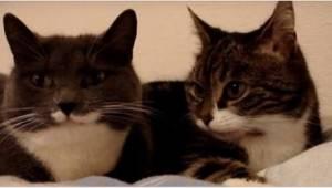 Właściciel nagrał dwa koty leżące na łóżku i gorąco dyskutujące. Zobaczcie, jak