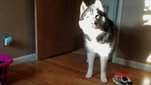 To, jak ten pies reaguje na wyrzuty swojej pani, gdy ta zobaczyła, że brakuje je