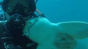 Za każdym razem, gdy nurkuje, zbliża się do niego rekin i robi coś niewiarygodne
