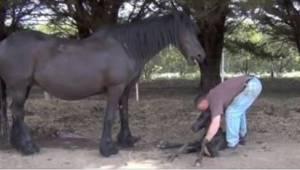 Najpierw pomógł klaczy, a potem źrebakowi. Piękne nagranie!
