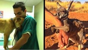12 zwierząt, które są bardzo wdzięczne swoim ratownikom!