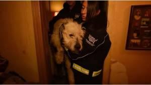 Po tym, jak uratowała tego psa, przyjechała go odwiedzić. Jego reakcja wzruszyła