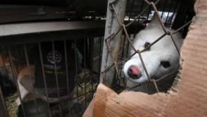 Władze Korei bezskutecznie próbowały wstrzymać handel psim mięsem podczas Olimpi