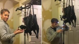 Pomysł na jaki wpadł pewien właściciel psa jest bardzo oryginalny i spodobał się