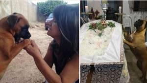 Po śmierci swojej pani sunia zrobiła coś, co poruszyło całą jej rodzinę.