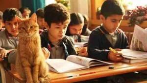 Gdy do szkoły przypałętał się bezpański kot, rodzice dzieci byli sceptycznie nas