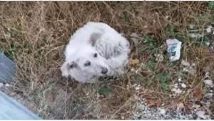 Gdy zobaczył na poboczu zamarzającego z zimna, porzuconego psa, od razu zahamowa