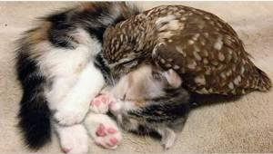 Zaopiekował się sówką, a dla towarzystwa dla niej przygarnął też kotka. Zobaczci