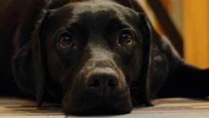 """List psa poddanego eutanazji do swojego nieodpowiedzialnego właściciela: """"Dzisia"""