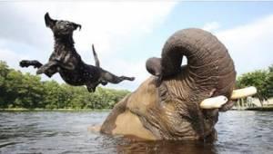 Gdy właścicielka psa zobaczyła, co ten robi ze słoniem, postanowiła codziennie z