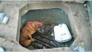 Niewidoma sunia miała zginąć z głodu w starej studni. Wtedy nadeszła pomoc z nie