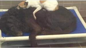 Ich właściciele spodziewali się dziecka i dlatego zgotowali zwierzętom piekło.