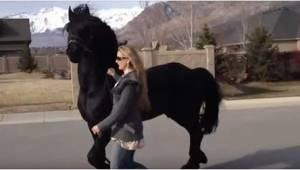 Bierze swojego konia na krótki spacer... Sąsiedzi wyglądają na zaskoczonych!