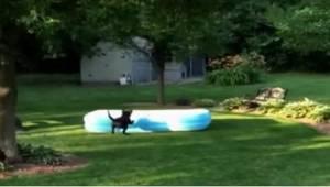 Jak wygląda zabawa w chowanego z psem? Uśmiejecie się! :)