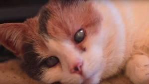 To, co właściciel przygotował dla swojego niewidomego kota, chwyta za serce!