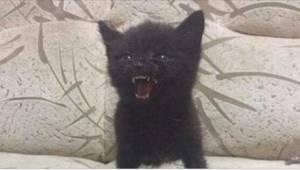 13 rozgniewanych kociąt, które pomimo starań są zbyt słodkie, by być groźne.