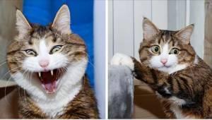 Internauci oszaleli na punkcie tego kota. Jego miny mówią wszystko!