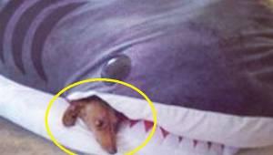 12 psiaków przytłoczonych życiowymi problemami - to trzeba zobaczyć!