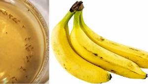 Najgorszy koszmar dla muszek owocowych. Oto prosty sposób jak się ich pozbyć!