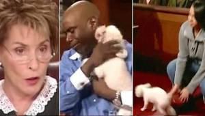 Pani sędzia pozwala skradzionemu psu biegać po sądzie by mógł rozpoznać prawdziw