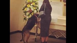 Dom pogrzebowy pozwala psu wejść do środka i pożegnać się ze swoim zmarłym panem