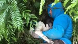 Mężczyzna zobaczył ciężarną suczkę w krzakach, gdy ją uratował stał się prawdziw