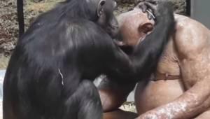 To jak ta łysa małpa znalazła miłość w zoo wzrusza do łez. Sam zobacz to nagrani