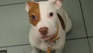 Ludzie zwracali tego psa do schroniska 6 razy zanim pracownicy zorientowali się
