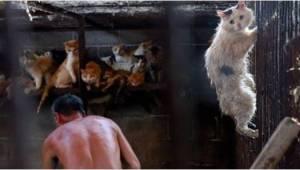 W Chinach w czasie jednej imprezy zabijają ok. 10 tysięcy psów i kotów. Nie uwie