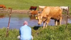 Mężczyzna filmuje krowy na pastwisku, nagle odkrywa, że jedna z nich desperacko