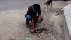 Pies umierał na środki drogi, a gdy zbliżyli się, by mu pomóc, zrobił coś niesam