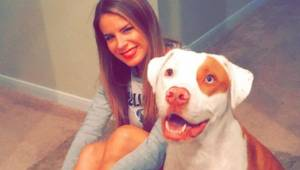 Pies umiera tragicznie z powodu prostego błędu: Właścicielka ostrzega wszystkich