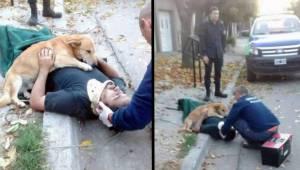 16 zdjęć psów, które pokazują co znaczy bezwarunkowa miłość.