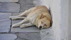 Ostrzeżenie dla właścicieli psów. Pies nagle zmarł na udar cieplny po spacerze w
