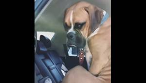 Właścicielka mówi do psa, żeby wyszedł z samochodu. Jego odpowiedź rozbawiła int