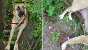 Pies został porzucony w lesie, a po trzech dniach dobrzy ludzie odkrywają przera