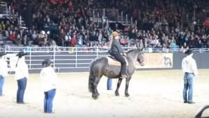 Zaczyna się ulubiona piosenka tego konia, wtedy jego ruchu robią wrażenie na wsz