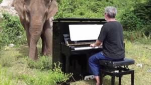 Pianista gra muzykę klasyczną dla starego i niewidomego słonia. Zobacz jak porus
