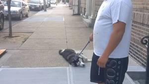 Pies położył się na chodniku i nie chce iść do domu. Lecz tylko spójrz co zrobił