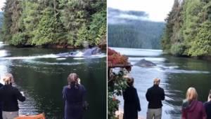 Wieloryby wpływają do małej zatoki i zadziwiają gości spędzających tam wakacje.