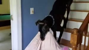 Pies chce dołączyć do właścicieli oglądających telewizję na kanapie, więc przyno