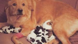 Adoptowali ciężarną suczkę tuż przed porodem. Gdy spojrzeli na szczeniaki nie mo