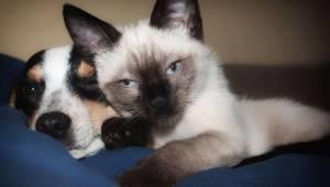Koty i psy razem to idealna para, przez którą nie będziesz mógł się przestać śmi